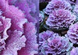 pantone paars bloemen